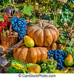 Autumn Harvest - Autumn harvest Pumpkin apples pears grapes...