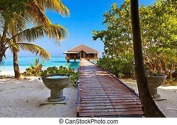 balneario, Bar, en, maldivas, isla,
