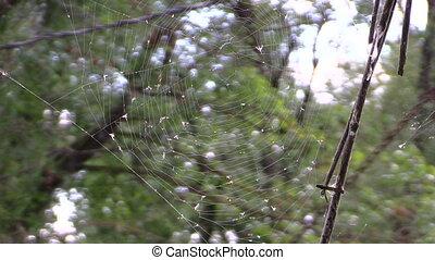 cobweb small fly tree - big cobweb with many of small flies...