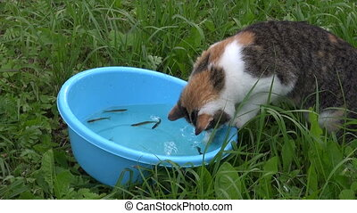 hungry cat catch fish - Hungry poor cat catch fishes from...