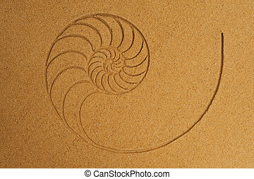 Shell Pattern in Sand - Chambered pattern of a cut nautilus...