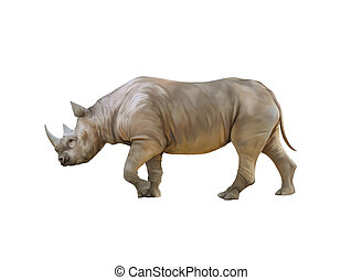 Big african Rhino, Rhinoceros isolated on a white background...