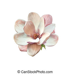 Illustration of a magnolia flower - Vector Illustration of a...