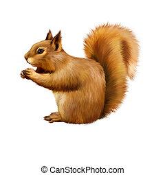 Red Squirrel, Sciurus Vulgaris, sitting eating, Isolated on...