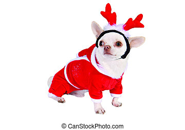 Dog cristmas suit with horns isolated on white