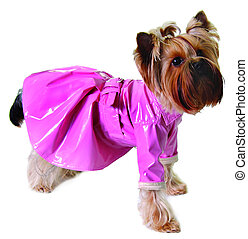 Dog in pink raincoat isolated on white