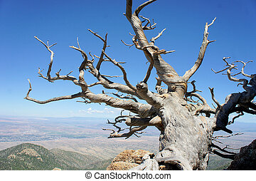 Tree growing on a rocky mountain - A Tree shows nature's...