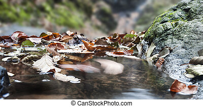 Autumn motion - Fallen leaves moving on the water surface in...