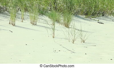 Grass on sandy beach - Green grass on sandy beach in summer