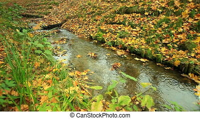 Creek in autumn forest. Full HD.