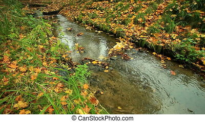 Creek in autumn forest. Full HD