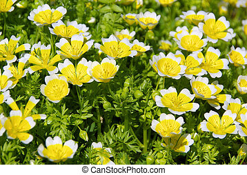 poached egg plant 02