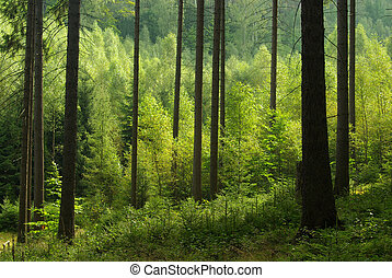 forest 41