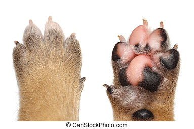 Close up dog paw on white background