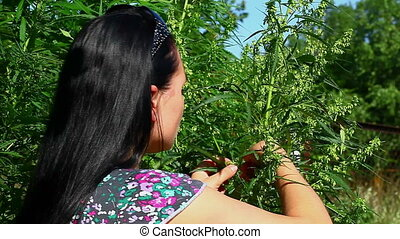 Woman near the cannabis plant