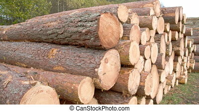Heaps of logs from the cut spruce trees or pine trees. A...
