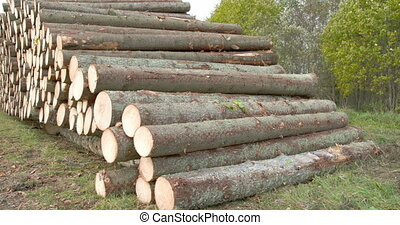 Heap of logs from spruce trees