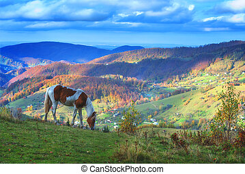 horse - brown horse in mountain hill