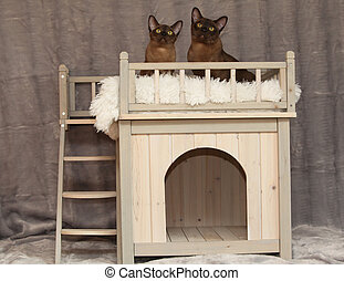 Cat house in front of silver blanket - Cat house with cats...