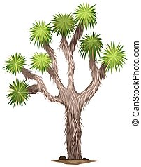 The Yucca brevifolia tree - Illustration of the Yucca...