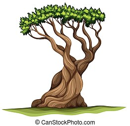 A Bristlecone pine tree - Illustration of a Bristlecone pine...