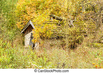 Old shack or out house with vegetation all around. Tree log...