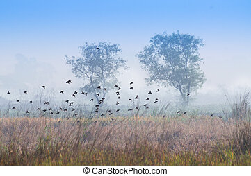 Birds flying in the winter mist, silhouette, Indian village...