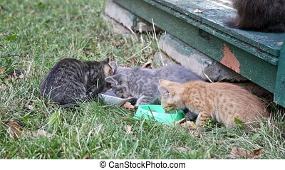 Three homeless kittens eat a forage from the bowls standing...