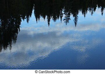 Reflections Of Forest