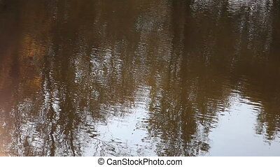 Autumn trees are reflected in water