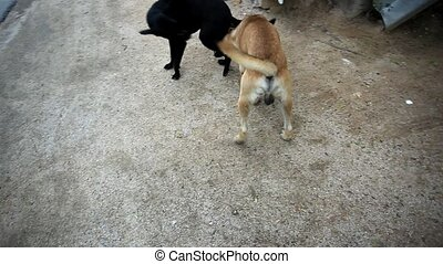 Two mongrel dogs playing on the street. HD. 1920x1080 - Two...