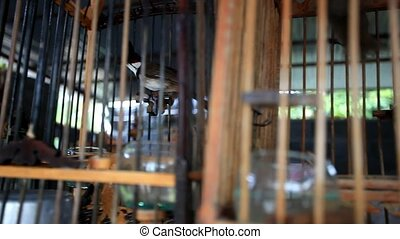 Common Myna birds in a cages on Thailand HD 1920x1080 -...