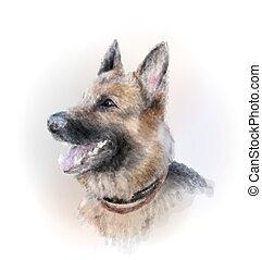 Retrato, de, a, alemão, pastor, cão,