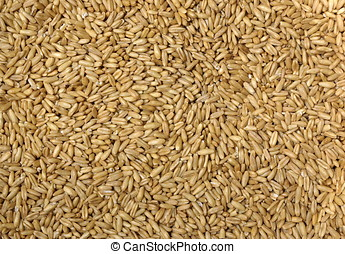 Fresh Oat Kernels - A close up view of a large amount of oat...