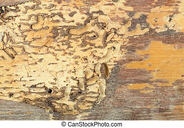 Wood damaged by woodworm - Detail of the plank piece...