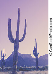Desert saguaro mountain background,