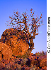 Dead Tree in Abiquiu - Dead tree illuminated by late...