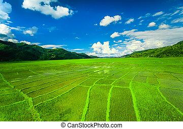 Himalayan rice field, Nepal