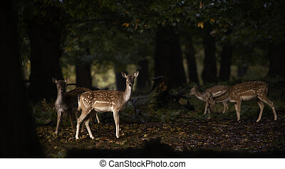 Group of fallow deer in the forest