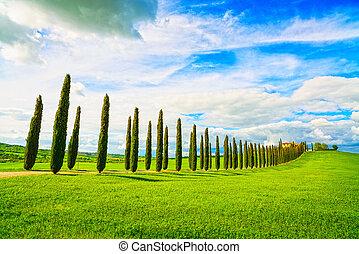 Tuscany, farmland, cypress trees row and field. Siena, Val d...
