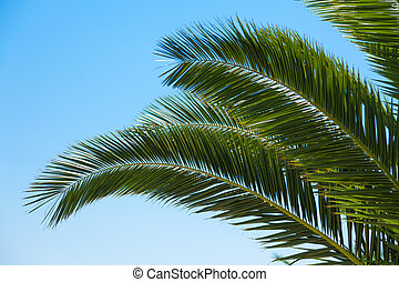 Palm tree branches over blue sky