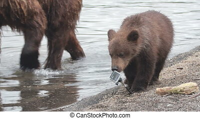 Bear breaks camcorder paw. Summer.