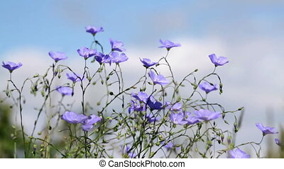 Wild flowers in the wind Asian Flax
