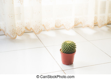 Home furnishings cactus
