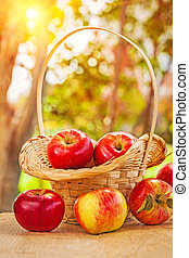 fresh ripe apples in wicker busket and on wooden table in...