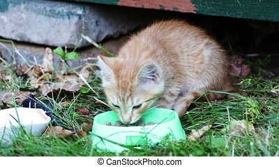 Street kitten eat a forage from the bowl standing on a grass