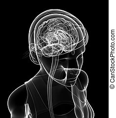 Female xray brain anatomy artwork