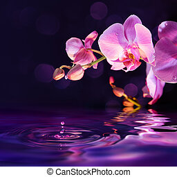 purple orchids and drops in water - purple orchids and drops...