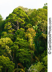 Baldachin,  rainforest