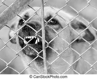 angry dog ??behind a fence